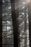 Sun Rays in the Forest. Sun rays pass through morning in the forest Royalty Free Stock Photography