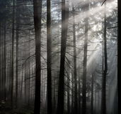 Sun Rays in the Forest. Sun rays pass through morning in the forest Stock Photography