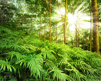 Sun rays in forest Stock Photos