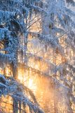 Sun rays through frosty trees Stock Images