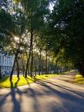 Sun rays go through green foliage in city park stock photos