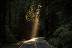 Sun Rays Goes Through Tree on Concrete Road Royalty Free Stock Image