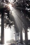 Sun rays Stock Photography