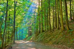 Sun rays in green deciduous forest. Nature Reserve. Trail by green deciduous forest. Nature Reserve. Pieniny National Park Stock Photo