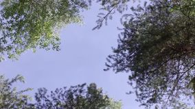 Sun rays in a green forest in spring. The edge of the trees in the forest in summer. forest edge, summer day. Sun rays in a green forest in spring. The edge of stock footage