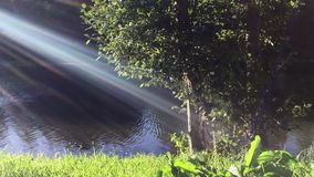Sun rays and green grass. Sunbeams shining on lush green grass and tree on the river bank stock video