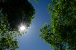 Sun rays. Through green leaves with blue sky Stock Photos