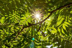 Sun rays through green leaves. Sunlight in trees foliage. Freshness concept. Nature and environment background. royalty free stock photos
