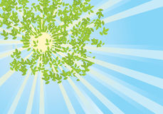 Sun rays in green leaves.Vector abstract Royalty Free Stock Image