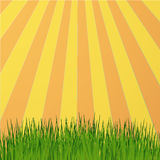 Sun rays green. Meadow ,spring background Royalty Free Stock Photo