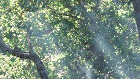 Sun rays Hurt smoke stock video