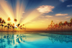 Sun rays inside coconut palms Stock Photo