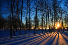 Sun rays through leafless trees. In winter royalty free stock photography