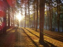 Sun rays. The Sun light in the forrest. At Pang-oong Meahongsorn Thailand Royalty Free Stock Photo