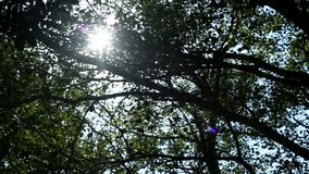 Sun rays light shines through trees and branches of forest . Beautiful background of exotic flora. Sun rays light shines through trees and branches of forest stock video footage