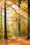 Sun rays lit glade in autumn forest Stock Image