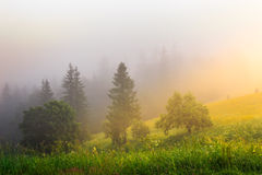 Sun rays make way through fog. Sun rays make their way through the fog to the trees Royalty Free Stock Photography