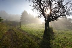 Sun rays in meadow Royalty Free Stock Photo