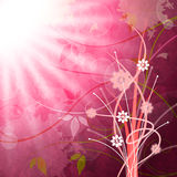 Sun Rays Means Flower Flowers And Pink Royalty Free Stock Photos