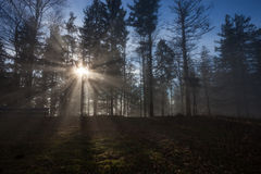 Sun rays in misty forest Royalty Free Stock Images