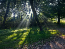Sun rays in misty forest Stock Image