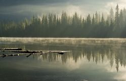 Sun rays through morning mist on a lake Stock Photography