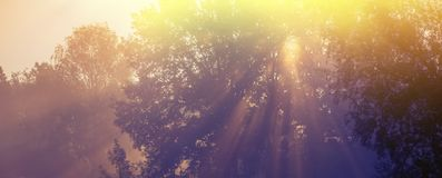 Sun rays in the morning mist. Spring season, in the countryside. Royalty Free Stock Image