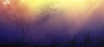 Sun rays in the morning mist. Spring season, in the countryside. Stock Photography