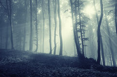Sun rays in a mysterious forest with fog Royalty Free Stock Photos