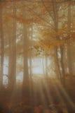 Sun rays nel legno Fotografia Stock