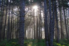 Sun Rays Oregon Forest stock photography