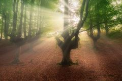 Sun rays in Otzarreta forest. At morning stock images