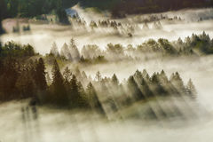 Free Sun Rays Over Foggy Oregon Forest Early Morning Royalty Free Stock Photo - 92158465