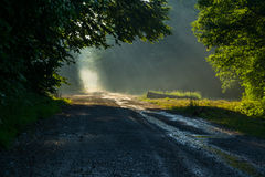 Sun rays over Forest road Stock Photos