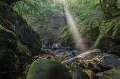 Sun rays over the river Stock Images