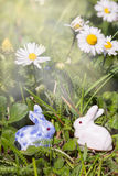 Sun rays over two easter bunnies. In the meadow Royalty Free Stock Image