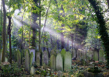 Sun rays on overgrown graves in cemetery Stock Images