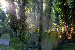 Sun rays on overgrown graves in cemetery Royalty Free Stock Photography