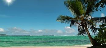 Sun rays of palm tree beach. Panorama Stock Photo