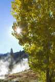 Sun rays peek out through leaves. Royalty Free Stock Photography
