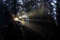 Sun rays penetrate through the trees in the forest. In Beskydy stock images