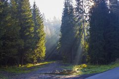 Sun rays penetrate through the trees. And illuminating the path and a pool of water stock images