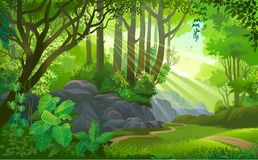 The path across a dense jungle with trees, grass, boulders, dirt, bushes and plants. Sun rays penetrating thick green forest with plants, trees and boulders with stock illustration
