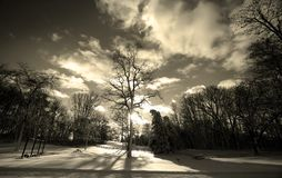 Sun Rays Piercing Through Tree Royalty Free Stock Image