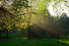 Sun rays shining Royalty Free Stock Photos