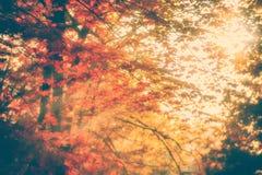 Sun Rays Shining Through Autumn Leaves stock photography