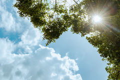 Sun Rays shining through branches of the green tree and blue sky. Background,  low angle view Royalty Free Stock Photos