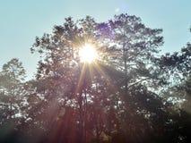 Sun rays shining Stock Photography
