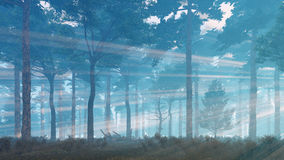 Sun rays shining in foggy pine forest Stock Photo