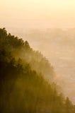 Sun rays shining through forest. Sun rays shining through a forest on a hill, at dusk Stock Photos